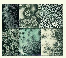 Mikroskopische Aufnahmen, Martin Gerlach