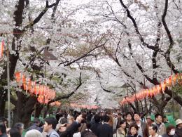 Ueno Koen in Tokio. Die weitläufige Parkanlage füllt sich (© MPS)