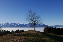 Über dem Nebelmeer in Übersaxen (© MPS)