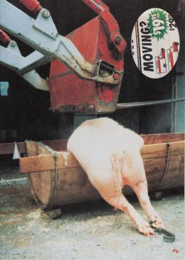 Ingeborg Strobl, Pig, 1996 Cover einer Publikation anlässlich der Ausstellung Moving In, Randolph Street Gallery, Chicago/Illinois, USA, April 26 – Juni 1, 1996 ©1996 Ingeborg Strobl / Bildrecht Wien 2019 Photo: © mumok