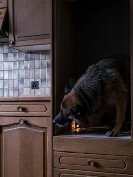 Polizeihund, Zürich, 2016; aus der Serie «How to Secure a Country». © Salvatore Vitale