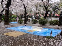Regentag im Ueno-Park und Kischenblüte (© MPS)
