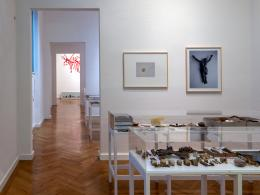 """Lois Weinberger, """"Debris Field – Erkundungen im Abgelebten"""", 2010/2016 (c) Foto: Günter Richard Wett"""