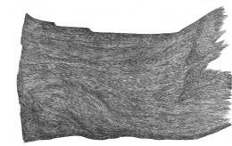 16521-16521eichhorn.jpg