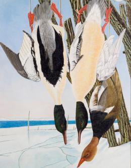 Dietrich Adolf Zwei tote Säger Kolbenente in Winterlandschaft, 1947 Öl auf Sperrholz, 80 x 58.6 cm Höhe, Breite Kunstmuseum Thurgau, Kartause Ittingen © Pro Litteris Zürich
