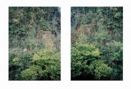 Barbara Bühler, Wald_I+II, Farbfotografien, 2018