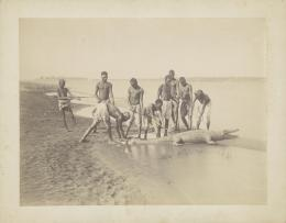 «Krokodiljagd». Émile Béchard. Albuminabzug. Ägypten, um 1875. Museum Rietberg, Zürich   FRP 1-46