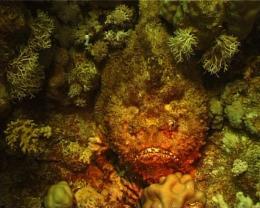 Careless Reef Part 4: Marsa Abu Galawa, 2004, Gerard Holthuis