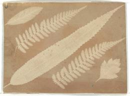 William Henry Fox Talbot Blätter und Farn Salzdruck (Fotogramm) um 1840 8,0 x 10,8 cm Museum Ludwig, Köln