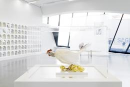 © Kunstmeile Krems, Foto: Claudia Rohrauer,  Artifex Gallina Aurea, 2015 Präpariertes Huhn, Eier vergoldet, Polyurethanschaum, Plexiglas, Perspex 45,5 × 65,9 × 45,9 cm Privatbesitz © Renate Bertlmann